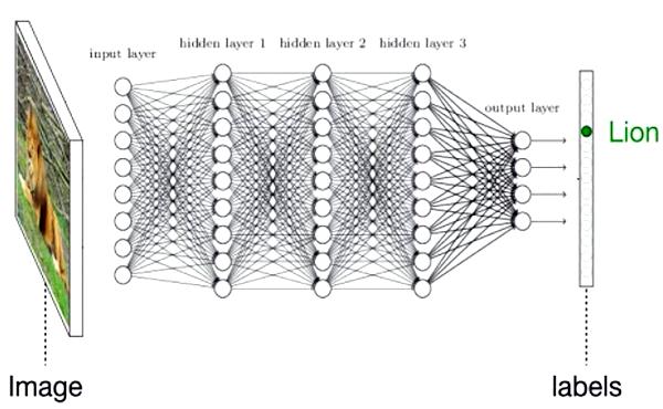 هرس شاخههای هوش مصنوعی راهکاری برای کوچکتر کردن شبکههای عصبی